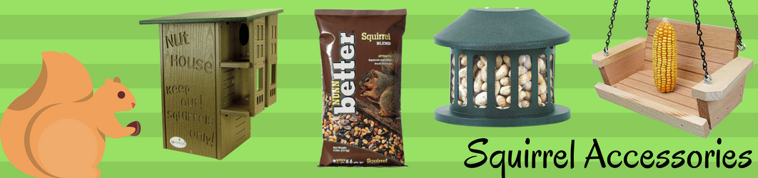 squirrel-banner-1-.png